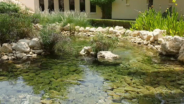 Giardini acquatici vivaio bellucci e stefanelli todi - Giardino d acqua ...